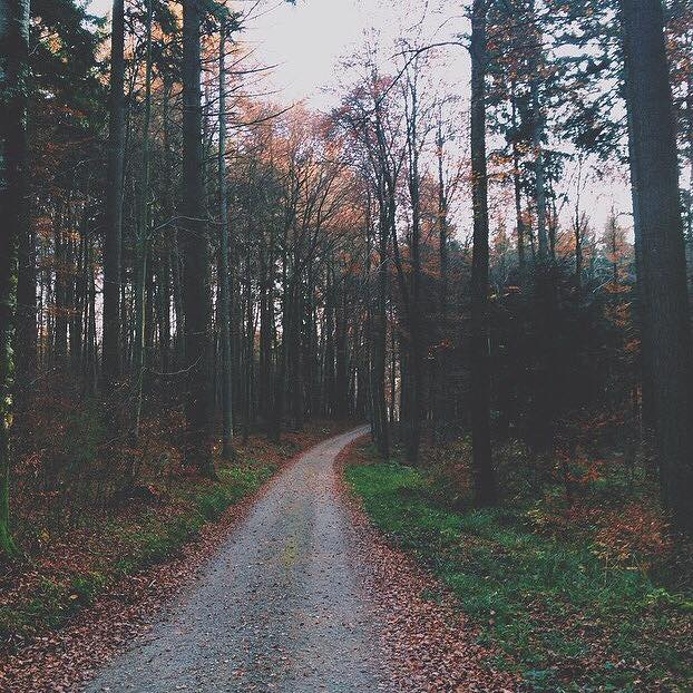 One of the many beautiful paths through the Black Forest